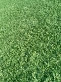 千葉マリンの芝(1)
