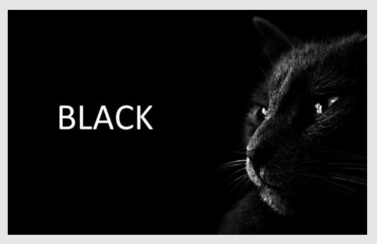 厳しい目を光らせた黒猫の写真