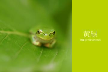 緑の葉の上でちょこんとこちらを見ている黄緑色のカエルの写真
