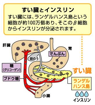 胃・血管・・肝臓・・膵臓・ランゲルハンス島・筋肉・ブドウ糖・インスリンのイラストと説明図
