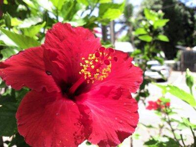 f:id:flower-and-travel:20161003152537j:plain