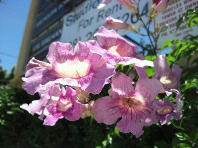 f:id:flower-and-travel:20161003152559j:plain
