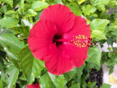 f:id:flower-and-travel:20161014165156j:plain