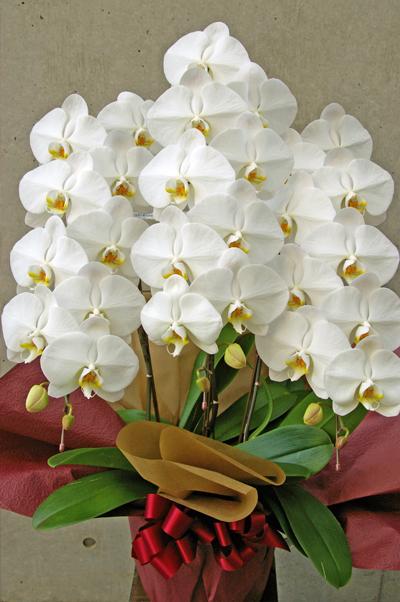 f:id:flower-flower-flower:20160816160138j:plain