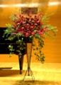f:id:flower-ivy:20120907131358j:image:medium:right