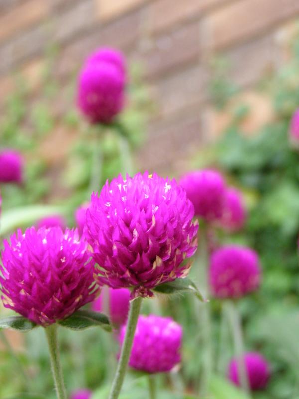 f:id:flower-sea:20091005105534j:image