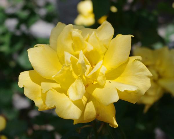 f:id:flowerTDR:20160616222810j:plain
