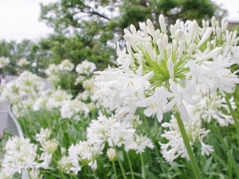f:id:flowerTDR:20160630122024j:plain