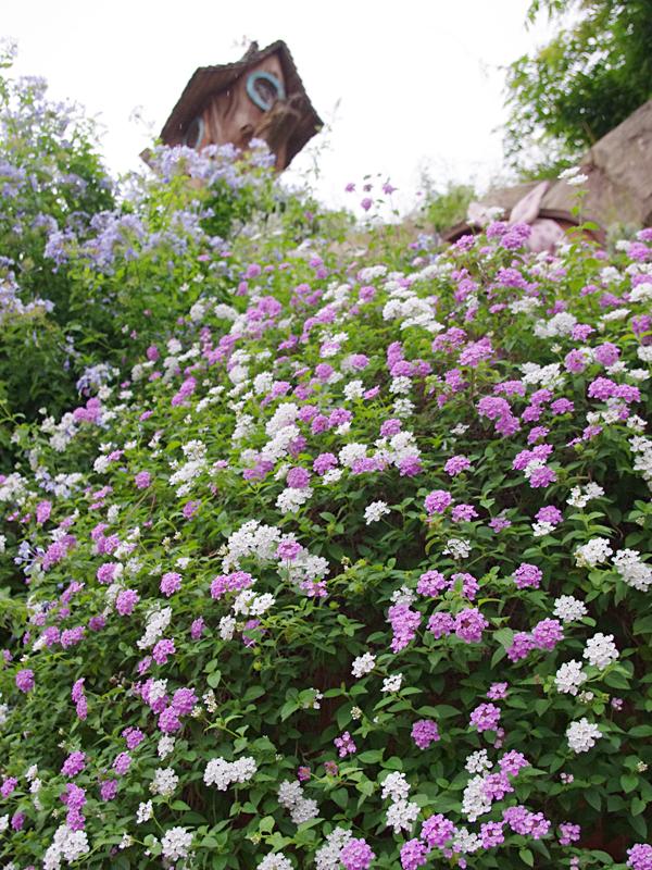 f:id:flowerTDR:20160701023626j:plain