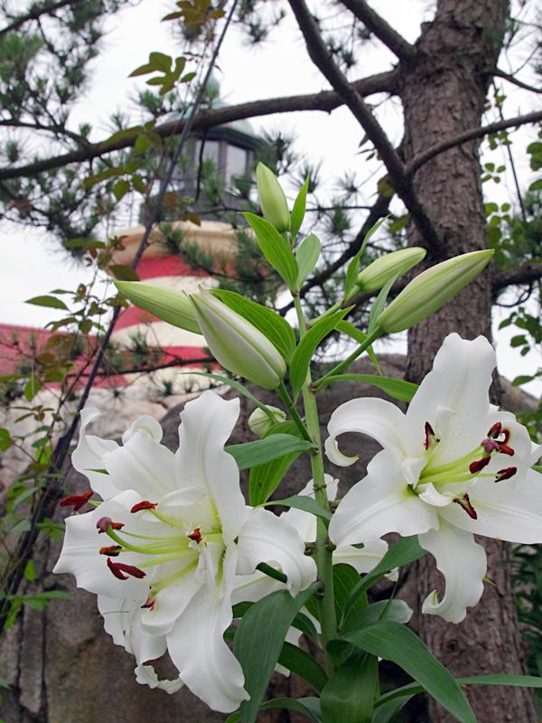 f:id:flowerTDR:20160702090903j:plain