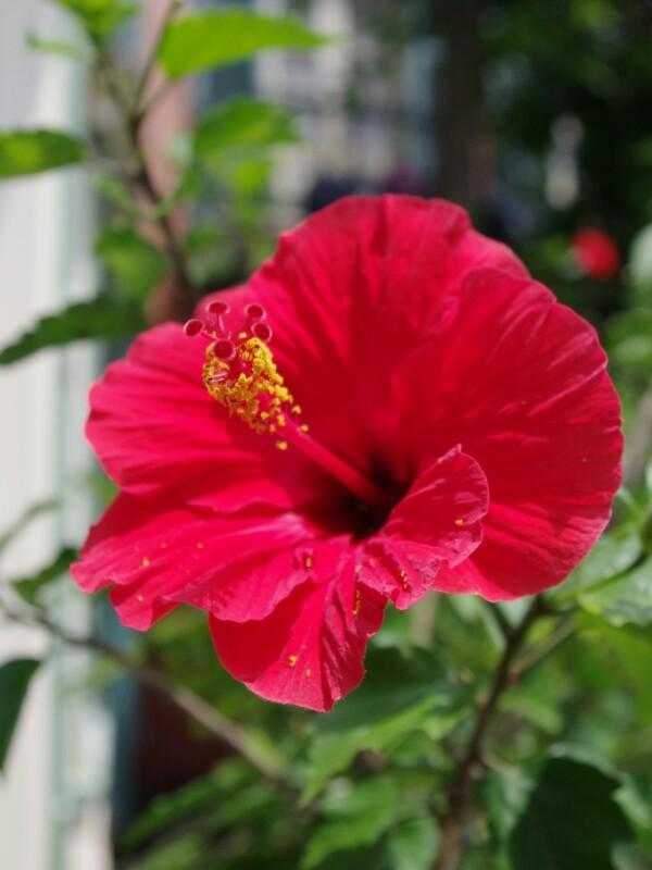 f:id:flowerTDR:20160702234041j:plain