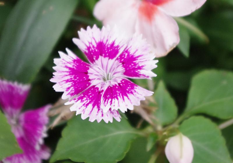 f:id:flowerTDR:20160704002211j:plain