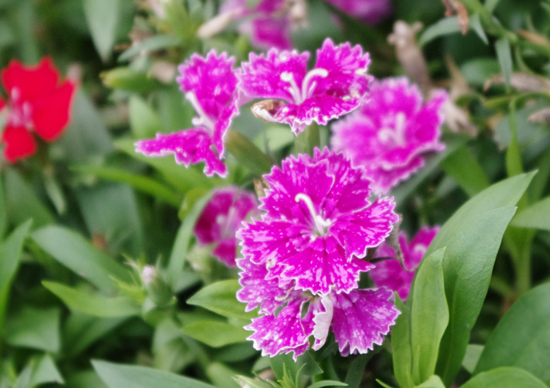 f:id:flowerTDR:20160704002219j:plain