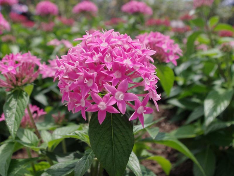 f:id:flowerTDR:20160704004400j:plain