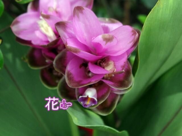 f:id:flowerTDR:20160705093635j:image