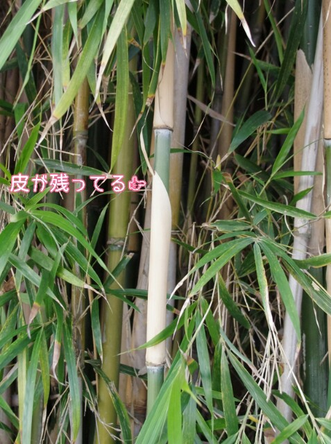 f:id:flowerTDR:20160707230115j:image