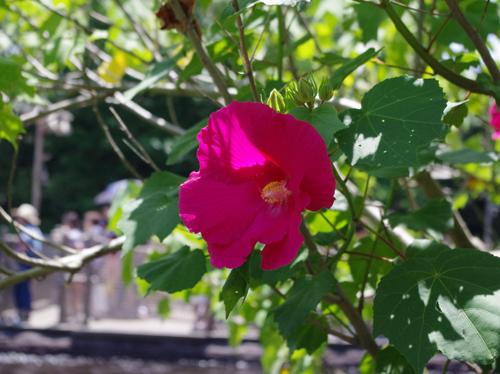 f:id:flowerTDR:20160710233207j:plain