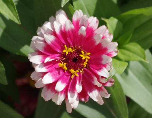 f:id:flowerTDR:20160726212937j:plain