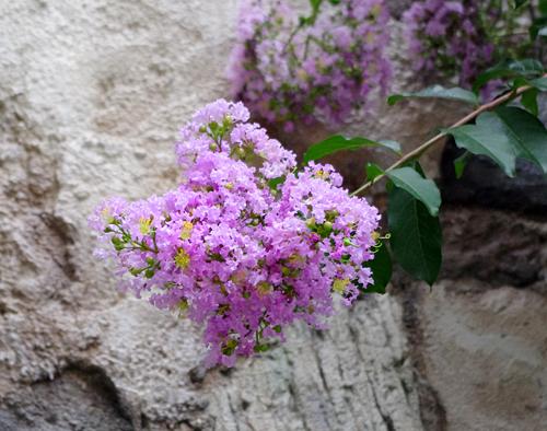 f:id:flowerTDR:20160808083029j:plain