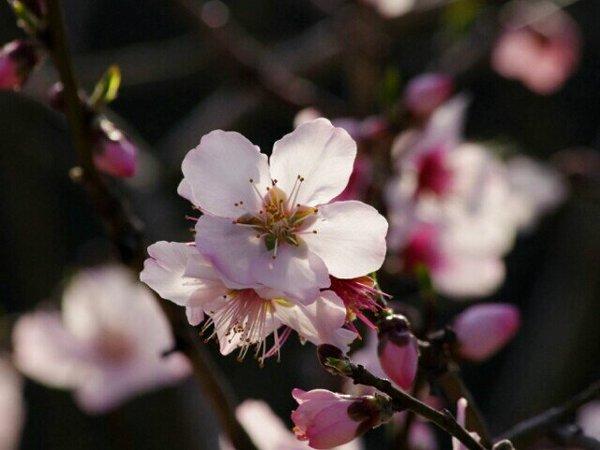 f:id:flowerTDR:20160811082408j:plain