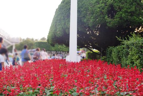f:id:flowerTDR:20160815204701j:plain