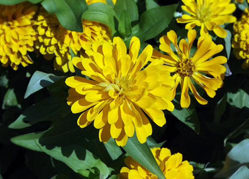 f:id:flowerTDR:20160823132517j:plain