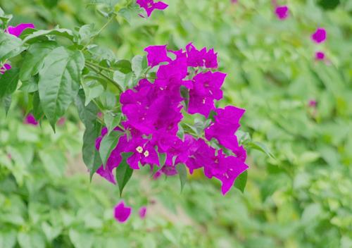 f:id:flowerTDR:20160825224540j:plain