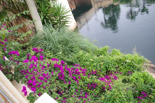 f:id:flowerTDR:20160825224552j:plain