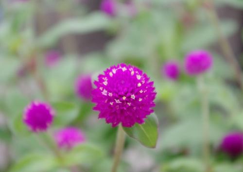 f:id:flowerTDR:20160830121638j:plain