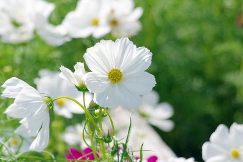 f:id:flowerTDR:20160908223124j:plain