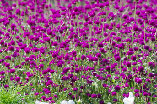 f:id:flowerTDR:20160908224444j:plain