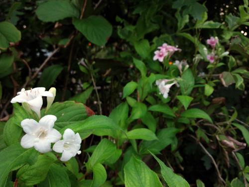 f:id:flowerTDR:20160924001805j:plain