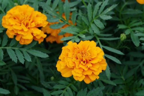 f:id:flowerTDR:20160925021100j:plain