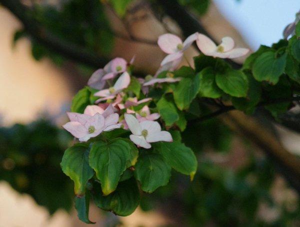 f:id:flowerTDR:20161018221120j:plain