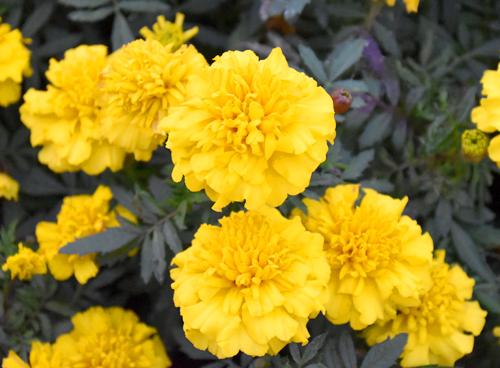 f:id:flowerTDR:20161125124653j:plain
