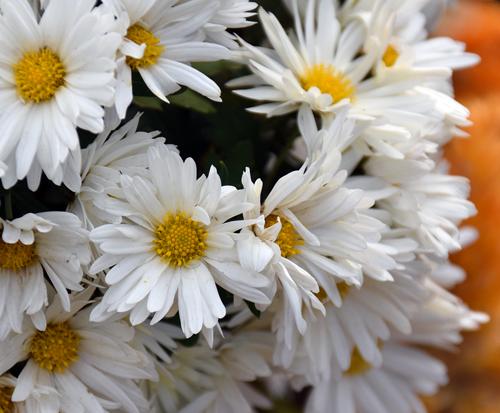 f:id:flowerTDR:20161128081541j:plain