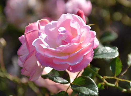 f:id:flowerTDR:20161203164955j:plain