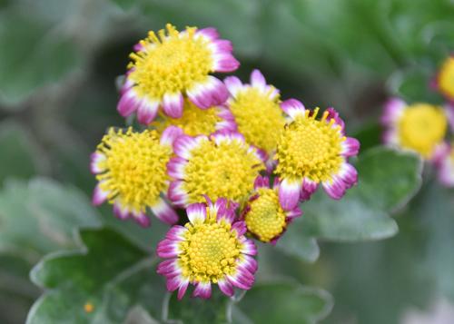 f:id:flowerTDR:20161206003934j:plain
