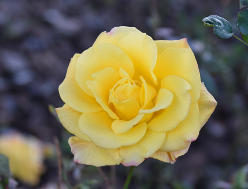 f:id:flowerTDR:20161226224720j:plain