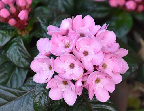 f:id:flowerTDR:20161228231847j:plain