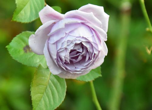 f:id:flowerTDR:20170108215523j:plain