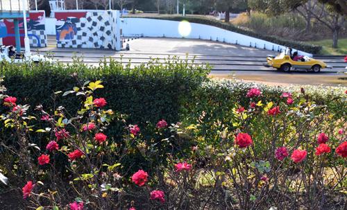f:id:flowerTDR:20170111190044j:plain