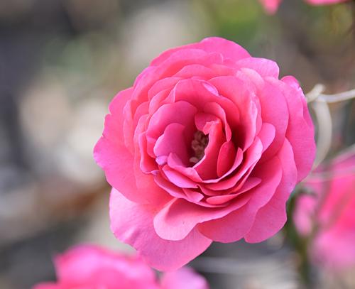 f:id:flowerTDR:20170111190110j:plain