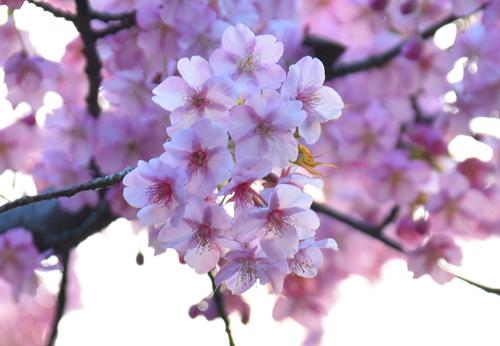 f:id:flowerTDR:20170213222823j:plain