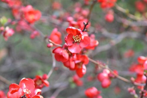 f:id:flowerTDR:20170223224454j:plain
