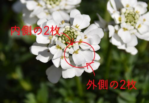 f:id:flowerTDR:20170316123413j:plain