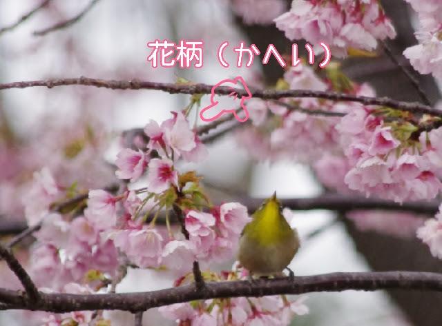 f:id:flowerTDR:20170317233051j:plain