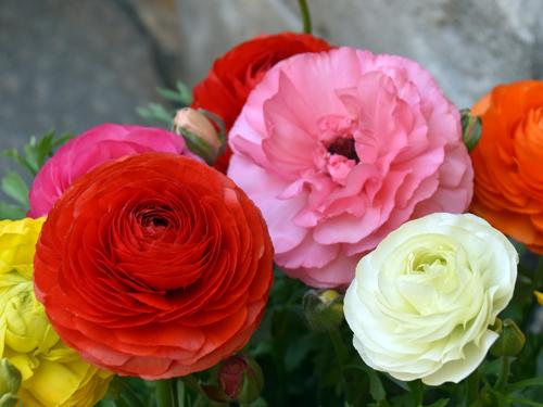 f:id:flowerTDR:20170319220354j:plain