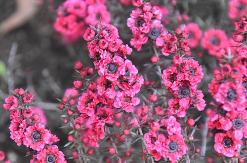 f:id:flowerTDR:20170407102950j:plain