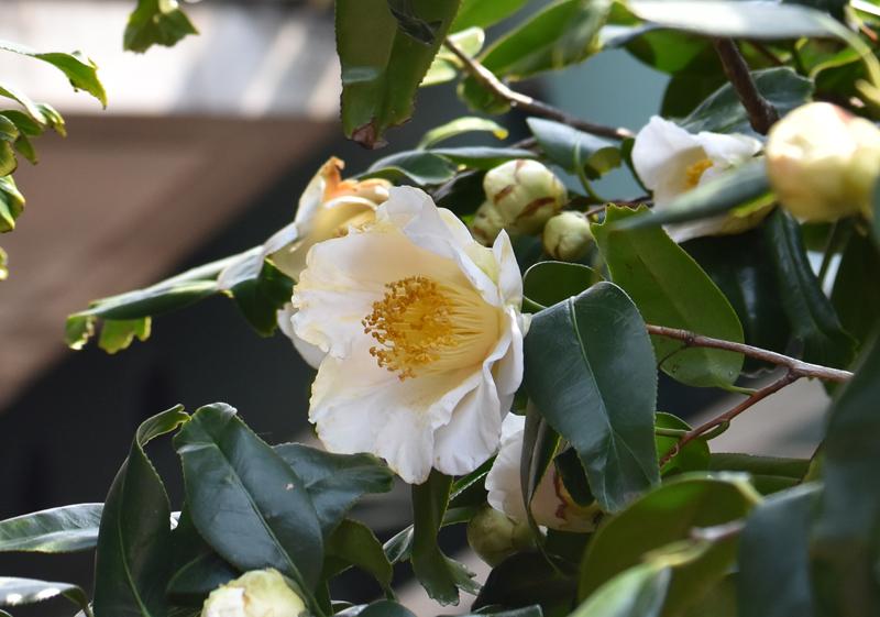f:id:flowerTDR:20170408211149j:plain